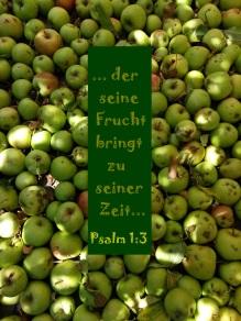 Äpfel - kopie